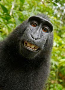 betydningen af drømme om en abe - drømmetydning abe som drømmesymbol