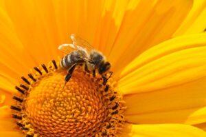 betydningen af drømme om en bi - drømmetydning bier som drømmesymbol