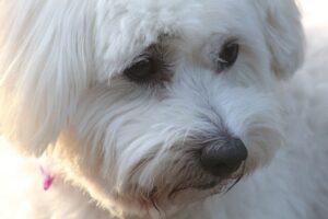 betydningen af drømme om en hund - drømmetydning hund som drømmesymbol