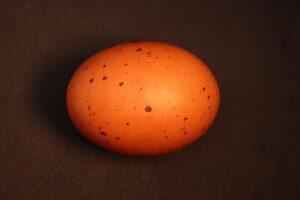 betydningen af drømme om æg / - drømmetydning æg som drømmesymbol