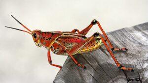 betydningen af drømme om insekter - drømmetydning insekt som drømmesymbol